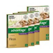 advantage_large_cat_87ea4a9b-3450-4cba-aaba-d094ebe217df-1