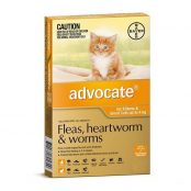 advocate-cat-small-orange__81260.1554391191-1